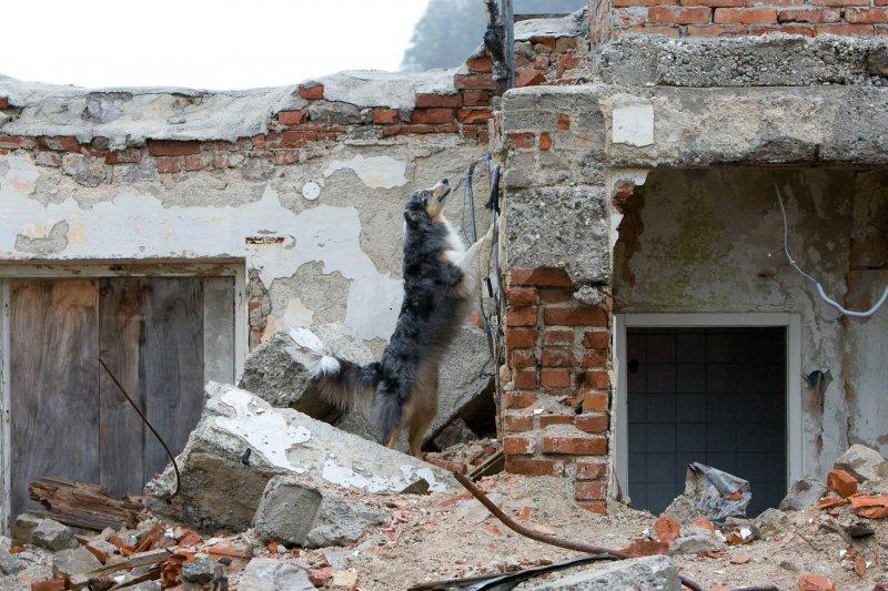 Picture of Reševalni psi